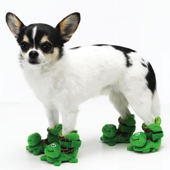Turtle slippers for dogs