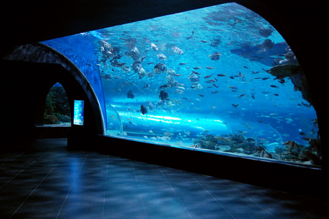 entrance fee oceanarium