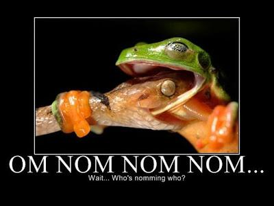 funny pictures nom nom nom
