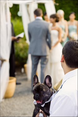 Dog in man's arms as bride and groom get married in the background