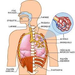 Anatomia del sistema