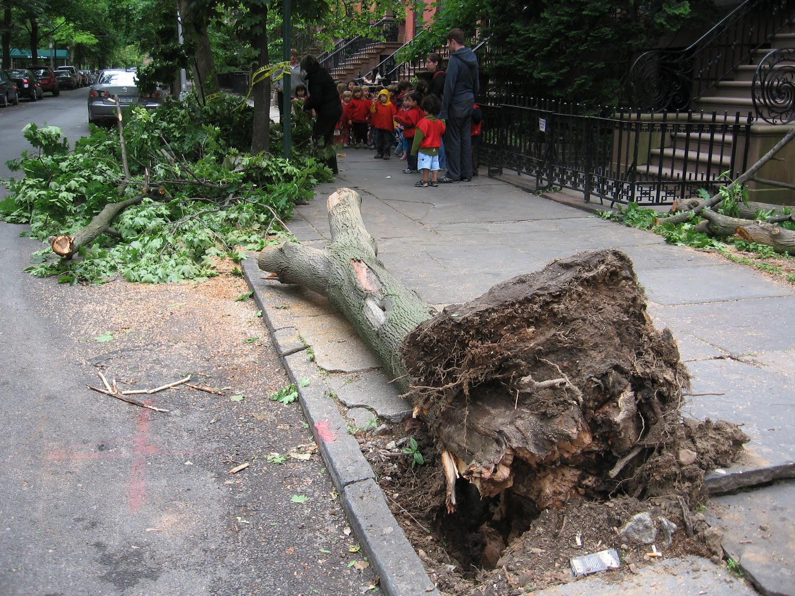 Research Paper Topics About Human Resources Tree Down Monroe MKMetz Index?id