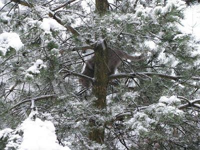gato, invierno, nieve, rusia