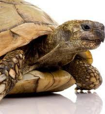 Pet Turtle Care: What Do Turtles Eat and Drink Pet Turtle Care