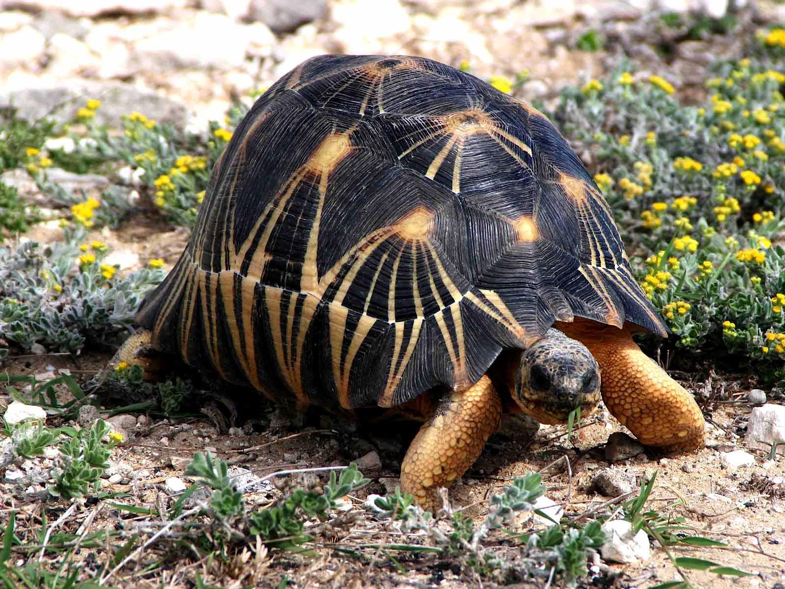 Pet Turtle CarePET TURTLE CARE