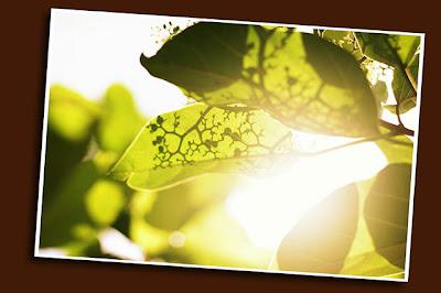 shadows on leaves