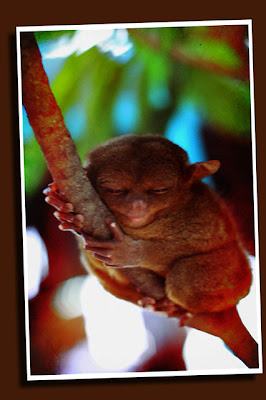 evil grin tarsier