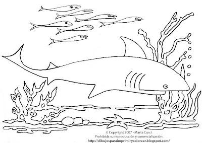 Dibujo Para Imprimir Y Colorear De Un Tiburon