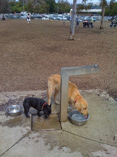 Barrington Dog park watering hole