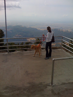 Dog atop Mount Diablo in Northern California