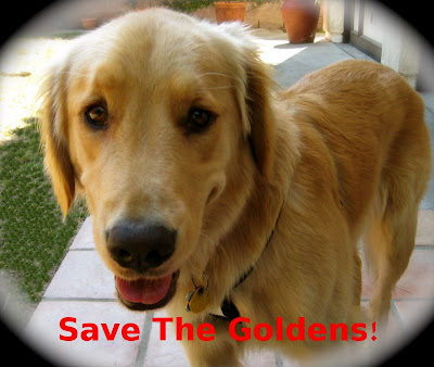 Finnegan asks to save some golden retrievers