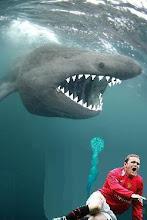 ROONEY SHARK BAIT