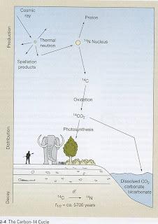 carbon 14 dating background information