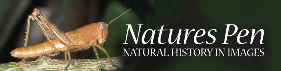 Natures Pen