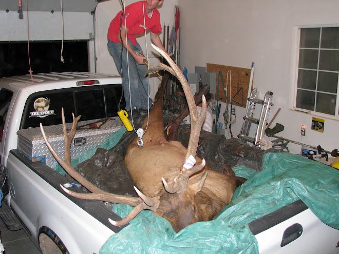 Amy Jo's Elk