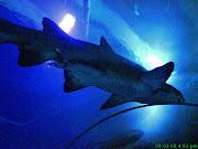 arghhh..shark!!!