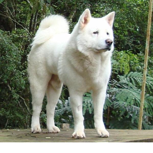 Por que senti tanto a perda do meu cão WHY I FELT SO SORRY ABOUT MY DOG'S DEATH...