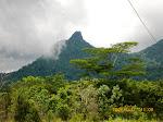 Hutan dan Gunung