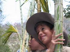Los palmeritos crecen como la Palma Real: a los seis años son brotes, a los ocho semilleros