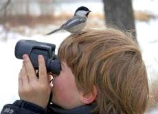 Muy pronto AVETON, participa observando la avifauna de El Hatillo