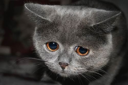 Sad Cat