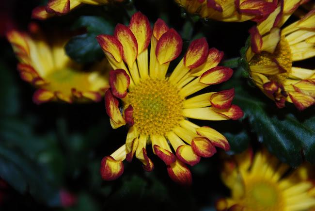 Floarea .... o minunatie