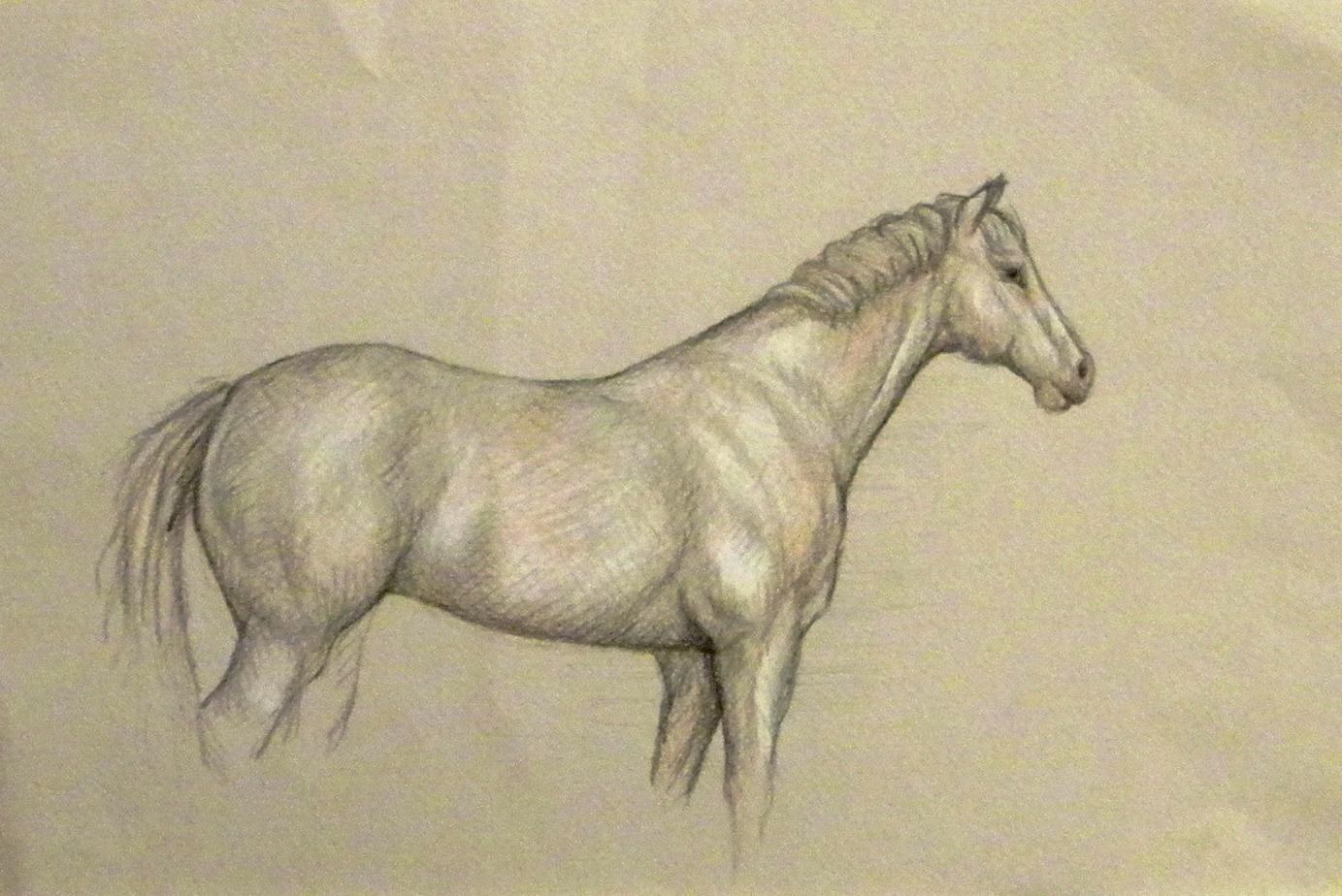 Dipinti disegni copie e rivisitazioni cavallo disegno for Disegni di cavalli a matita
