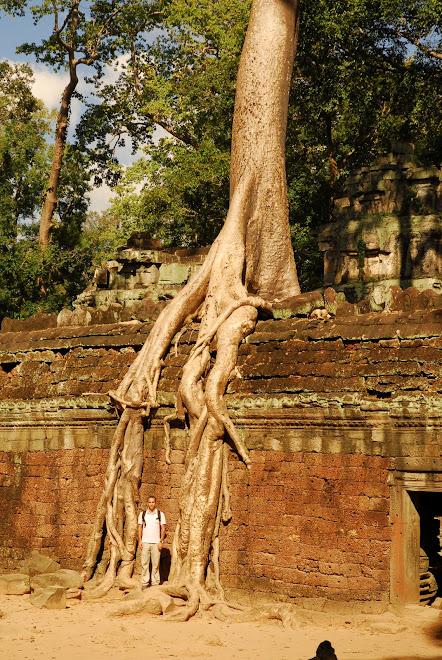 Árbol típico de Angkor