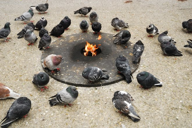 Sólo los americanos podían poner estufas para las palomas, esas ratas con alas!