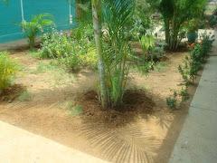 arborlizaciòn y areas verdes