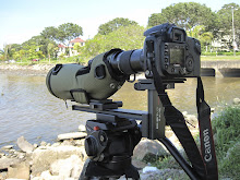 DSLR digiscoping