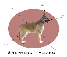 Anatomy of an Italian Shepherd