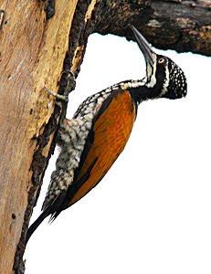 31/10/2009: Pulau Burung & Kampung Pertama (Penang)