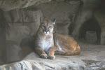 Cougar Treasure Cave