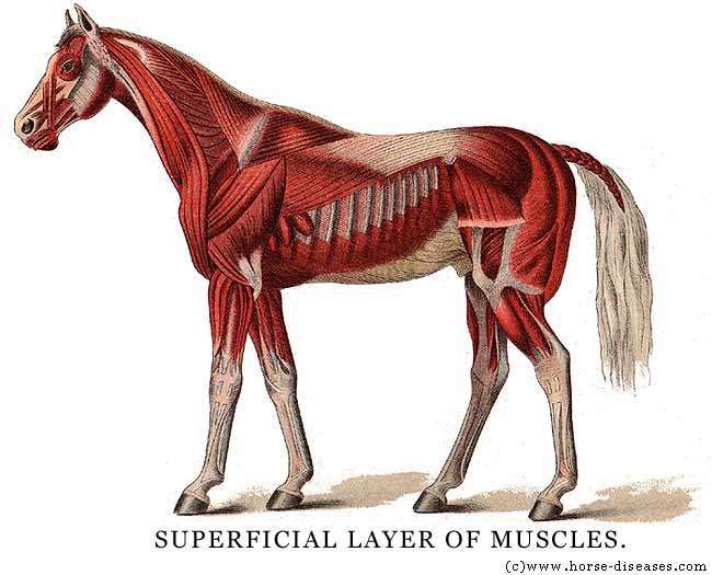 MADSCULPTOR: SATYR (legs Day 6)
