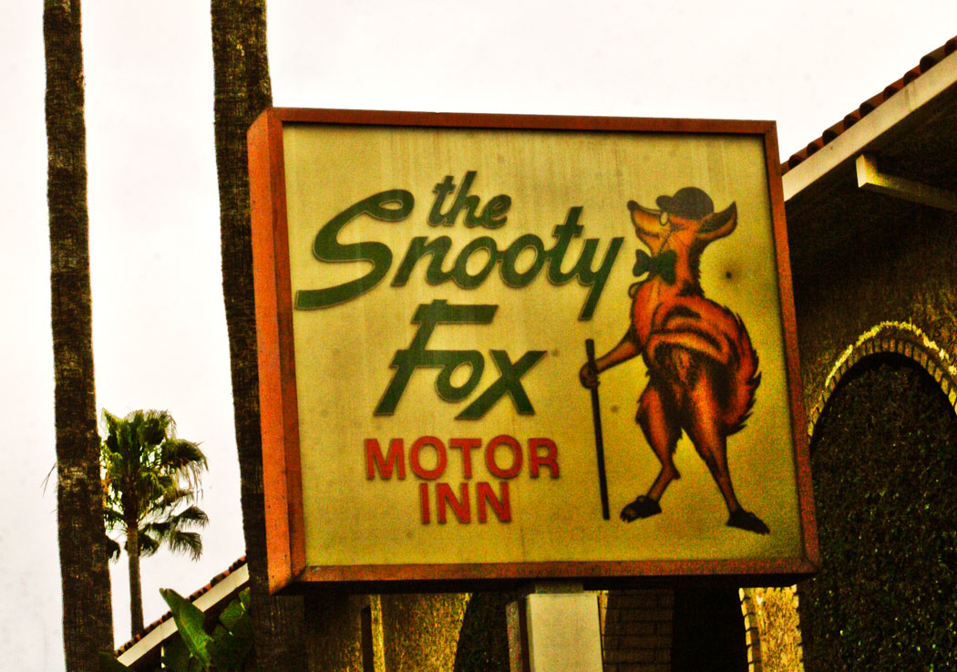 Image Gallery Snooty Fox