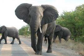 """Cómo trocear los """"elefantes"""" del día a día"""