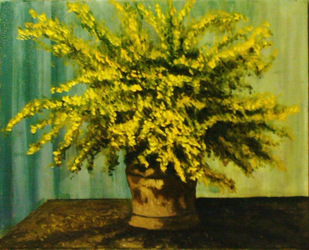 I quadri di casalini mimose copia for Mimosa in vaso
