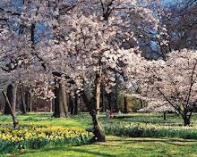 اقبل الربيع