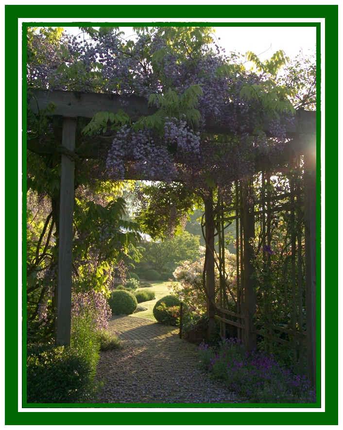 [wisteria1]
