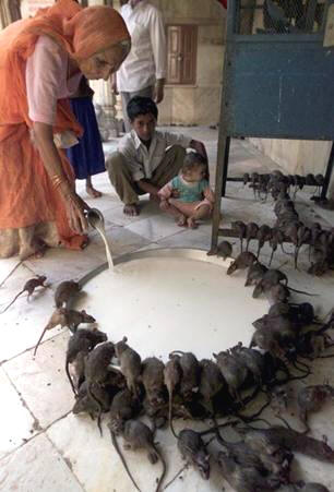 Ινδία