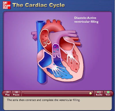 circulatory system. circulatory system pictures.