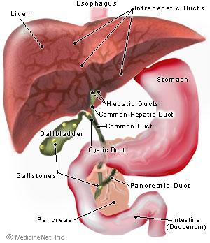 Kidney gallbladder
