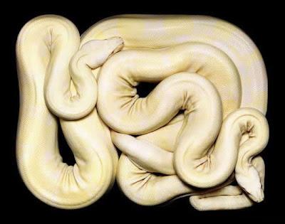 Foto Unik Macam-Macam Ular di Bumi