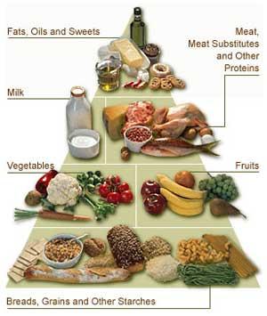 [Food-Pyramid.jpg]