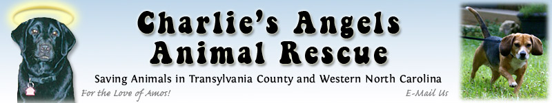 Charlie's Angels Animal Rescue Logo Contest