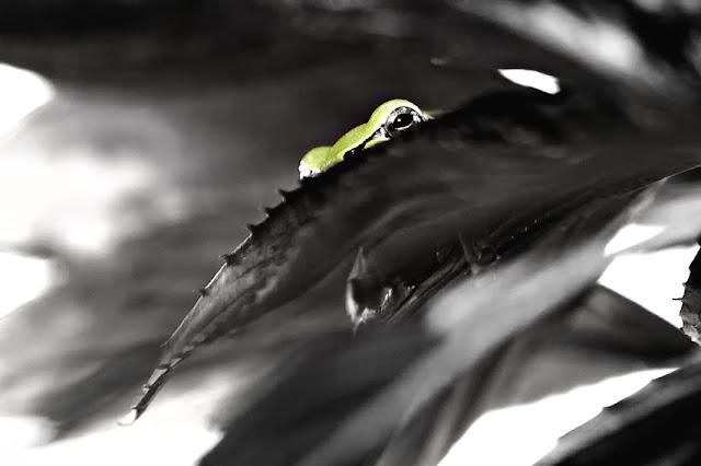 http://flowflo.blogspot.com/2010/10/frosch.html