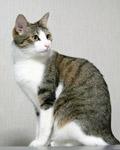 うちの猫2:シータ