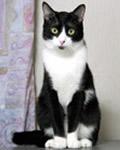 うちの猫1:トム