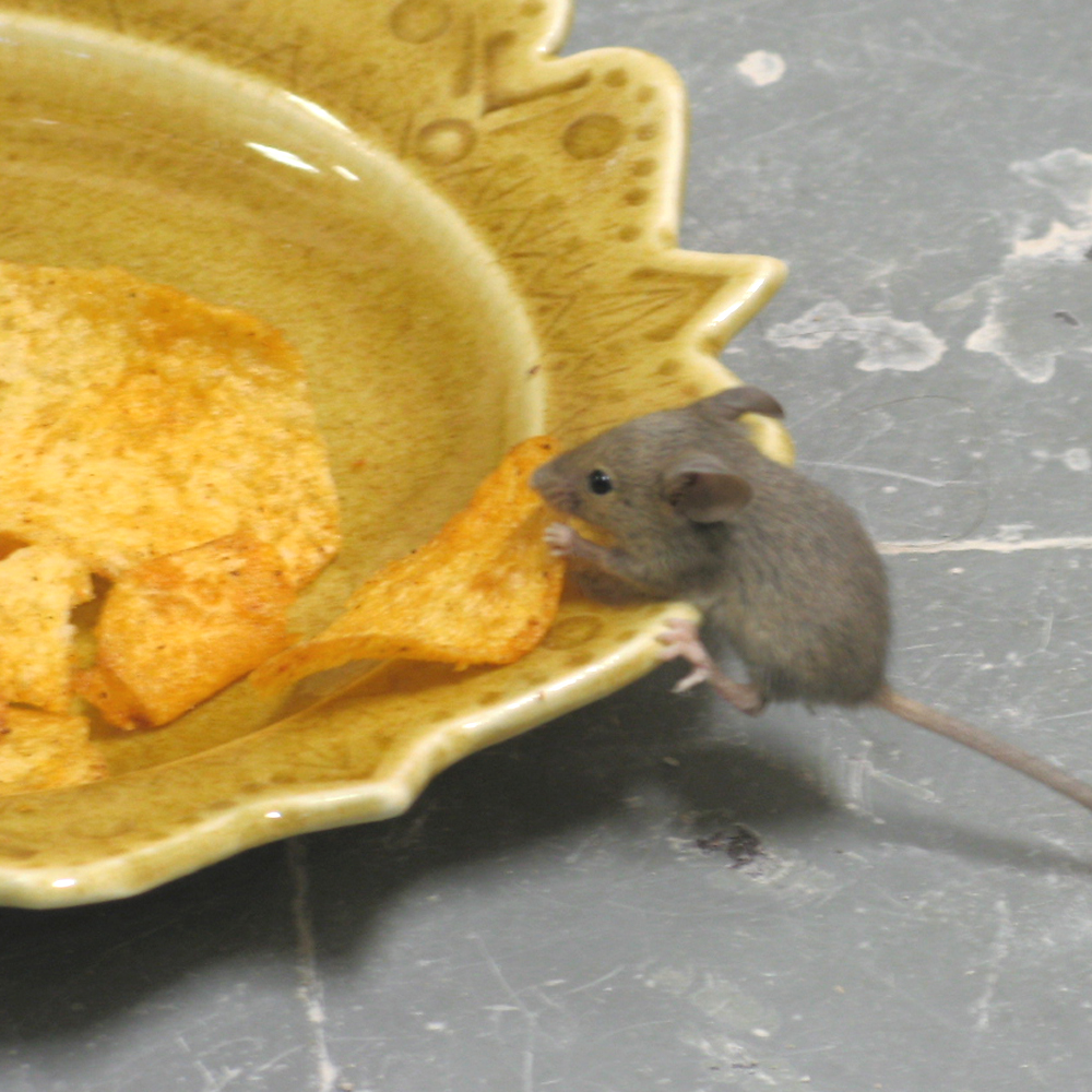 [mouse_2.jpg]